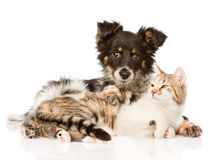 Cute dog embracing cat. isolated on white background Royalty Free Stock Photo
