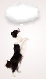 Cute dog with empty cloud bubble Stock Photo