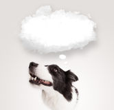 Cute dog with empty cloud bubble. Cute black and white border collie with empty cloud bubble above her head vector illustration