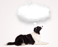 Cute dog with empty cloud bubble Royalty Free Stock Photography