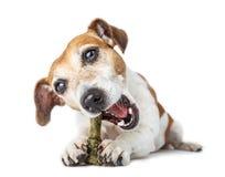 Pet joy food. Stock Photos