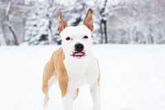 Cute dog enjoying the snow Stock Photo