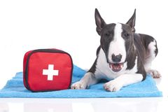 Cute dog with first aid kit Royalty Free Stock Photography