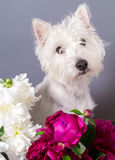 Cute Dog with Flowers royalty free stock photography