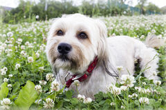 Cute dog in flowers Royalty Free Stock Photography
