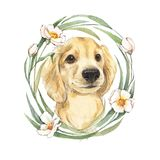 Cute dog and flowers Stock Photos