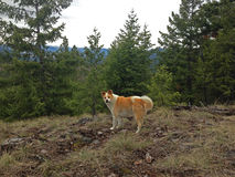 Cute Dog in Forest Royalty Free Stock Images