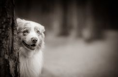 Cute dog in forest royalty free stock photo