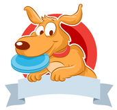 Cute dog with frisbee Stock Photos