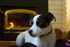 Dog and fireplace. Dog at home in front of warm fireplace during the fall and winter season Royalty Free Stock Photography