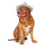 A cute dog in a funny hat is sitting. Isolated on a white background royalty free stock photo