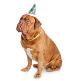 A cute dog in a funny hat is sitting Royalty Free Stock Photography