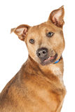 Cute Dog With Funny Smirk Stock Photos
