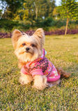 Cute Dog in the Garden Royalty Free Stock Photography