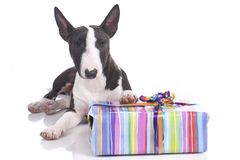 Cute dog with gift Royalty Free Stock Images