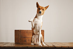 Cute dog giving his paw Stock Images