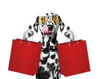 Cute Dog Goes Shopping Stock Photos
