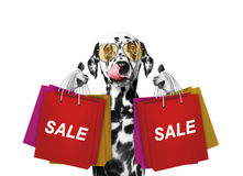 Cute dog goes shopping and sales. Isolated on white stock photography