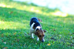 Cute dog going on the trail Royalty Free Stock Images