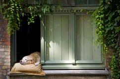 Cute dog Stock Image