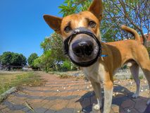 Cute dog. With gopro shooting wind angle blue sky background Royalty Free Stock Images