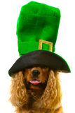 Cute dog in green hat Stock Images