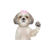 Cute dog is greeting you Royalty Free Stock Photo