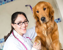 Dog handshaking at the vet Stock Photos
