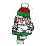 Cute dog in a hat, scarf and glasses. Purebred puppy. Spaniel in winter clothes. Vector illustration. Cute dog in a hat, scarf and glasses. Purebred puppy Stock Images