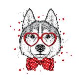 Cute dog with hearts, glasses and a tie. Vector illustration for a postcard or a poster, print for clothes. Valentine`s Day, love and friendship. Purebred Stock Images