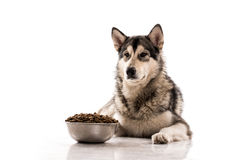 Cute dog and his favorite dry food on a white background Stock Photography