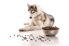 Cute dog and his favorite dry food on a white background Stock Photos
