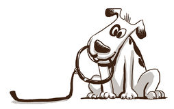 Cute Dog holding a leash Royalty Free Stock Image