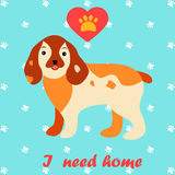 Cute dog I need home text. Homeless animals concept, pets adoption theme. Stock Photography