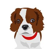 Cute dog illustration. Vector illustration of a cute dog in white background Stock Images