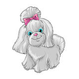 Cute dog. Illustration of a cute dog yorkshire terrier Stock Photo