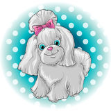 Cute dog. Illustration of a cute dog yorkshire terrier Stock Photography