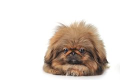 Cute dog isolated on white Stock Images