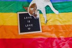 Free Cute Dog Jack Russell Sitting On Rainbow LGBT Flag In Bedroom. Letter Board Besides With Message LOVE IS LOVE.Pride Month Royalty Free Stock Photos - 151646418