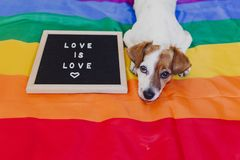 Free Cute Dog Jack Russell Sitting On Rainbow LGBT Flag In Bedroom. Letter Board Besides With Message LOVE IS LOVE.Pride Month Stock Photography - 151646572