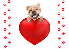 Cute dog with knitted hat hanging with paws on big valentine`s day heart, isolated on white background. Lovely cute dog with knitted hat hanging with paws on big royalty free stock images