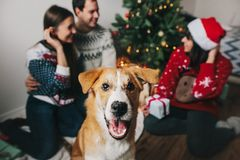 Cute dog with lights and happy family having fun at christmas tr. Ee. happy family moments. merry christmas and happy new year concept, seasonal greetings, happy Royalty Free Stock Photography