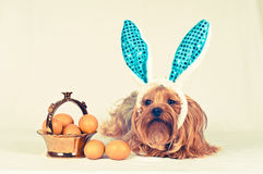 Cute dog like easter bunny Stock Photo