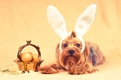 Cute dog like easter bunny Stock Photography