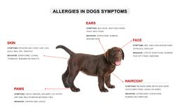 Cute dog and list of allergies symptoms. On white background stock photo