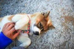 Cute dog. Stock Photography