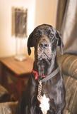 Cute dog looking at camera Royalty Free Stock Images