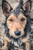 Cute dog looking at the camera. Dog looking cute camera pet eyes animal friend lovely portrait royalty free stock image