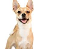 Cute dog looking at camera Stock Photos