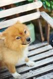 Cute dog looking at me Royalty Free Stock Images